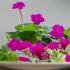 Hoa phấn - Bí kíp làm đẹp độc đáo của cung nữ triều Nguyễn ít người biết